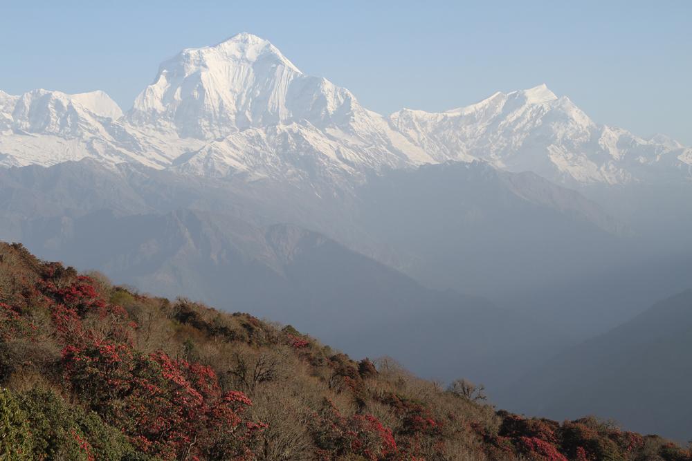Dhaulagiri from Pun Hill