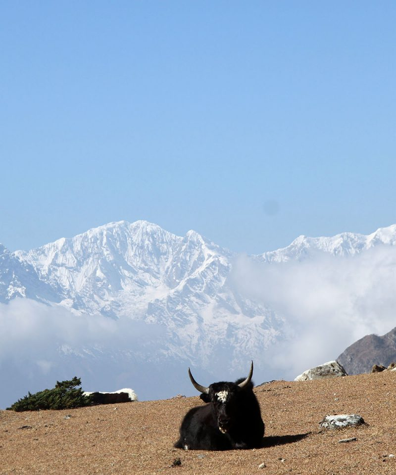 Mount Ganesh and Yak