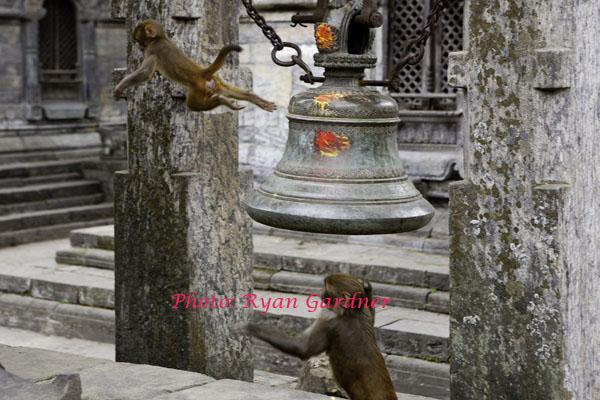 Monkeys at a temple
