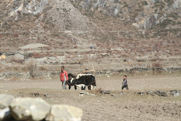 farmers of nile