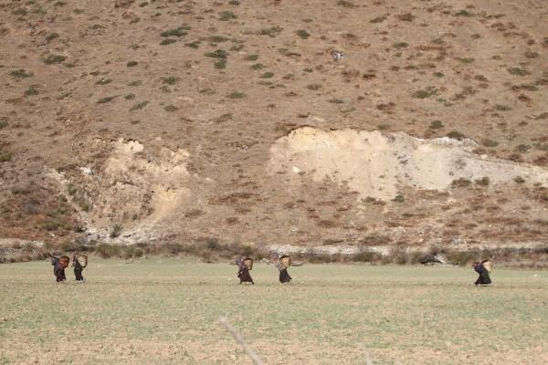 women off to their farmland