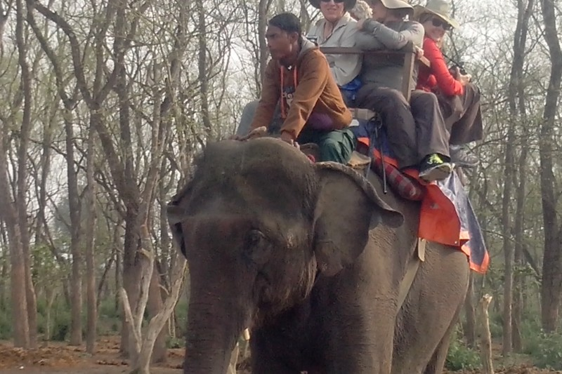 Elephant Ride - Jungle Safari in Chitwan