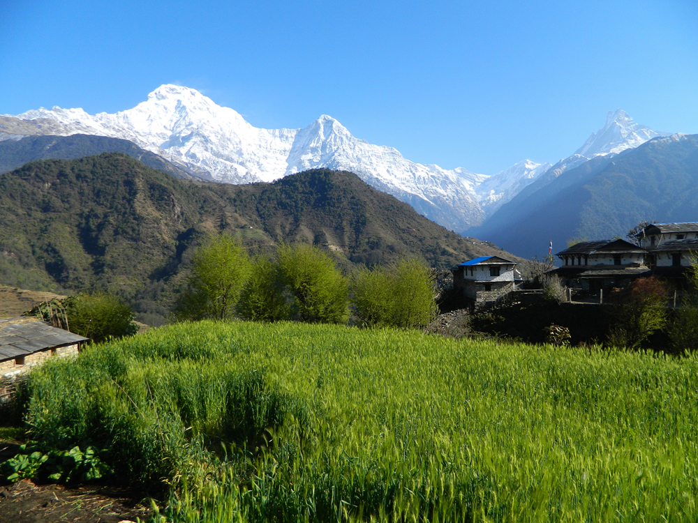Annapurna South from Dhampus