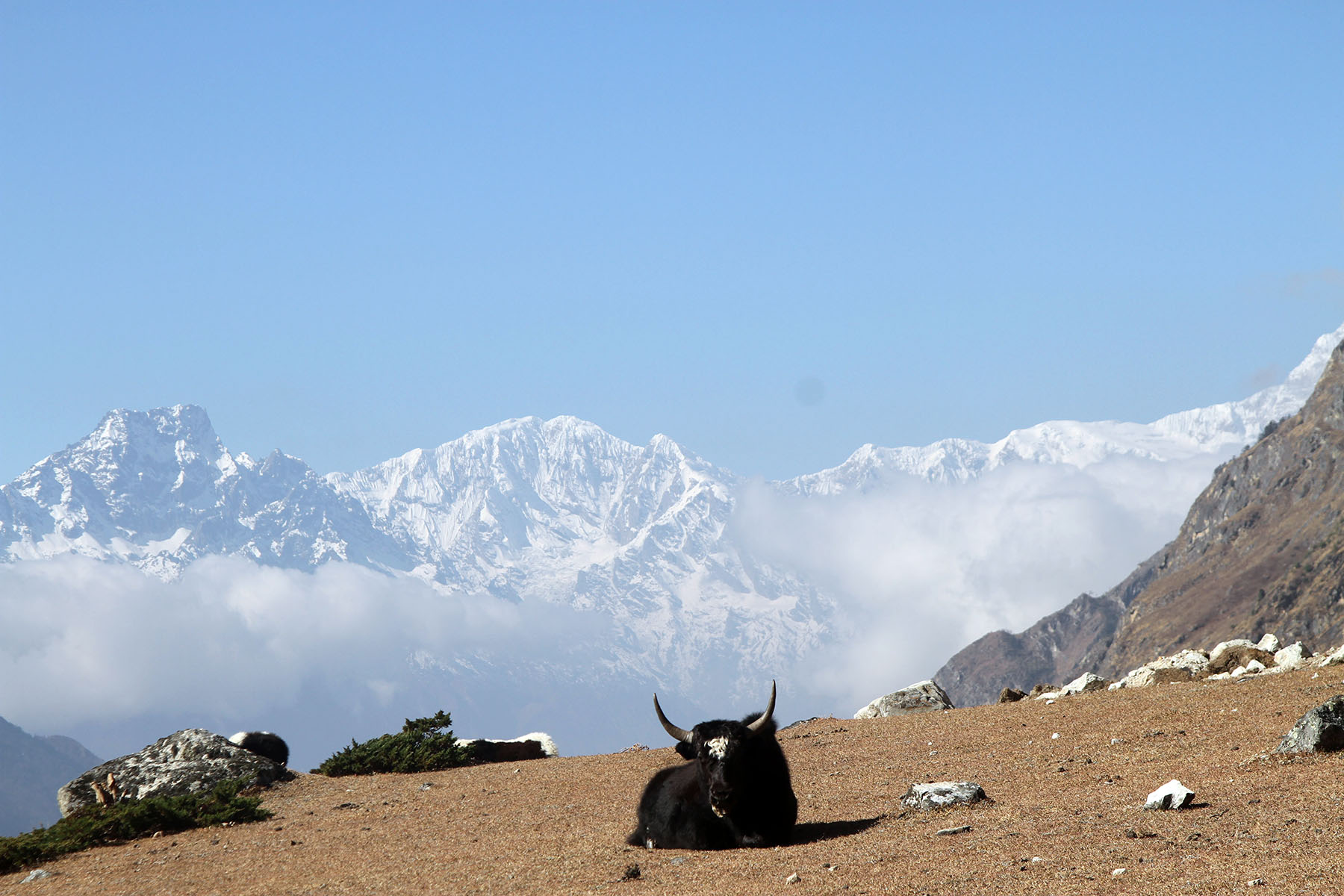 Mount Ganesh and Yak