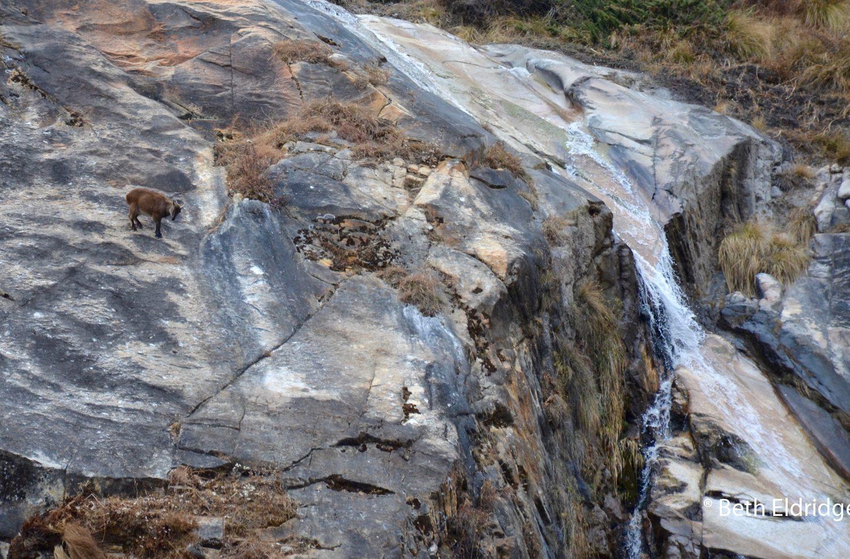 Himalaya Thar, Tsum Valley Trek