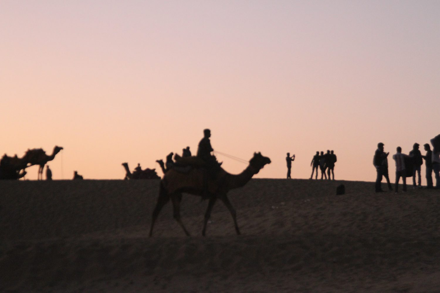 Camels in dunes